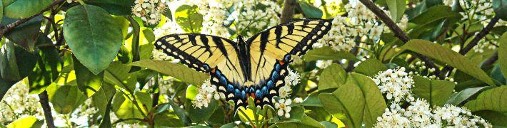 dieUmweltDruckerei fördert den Artenschutz