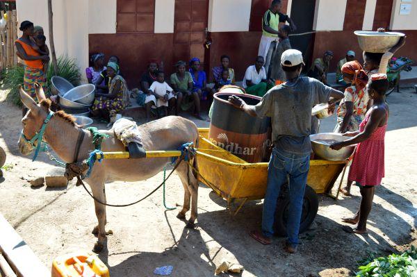 Esel befördert Wasser in Togo
