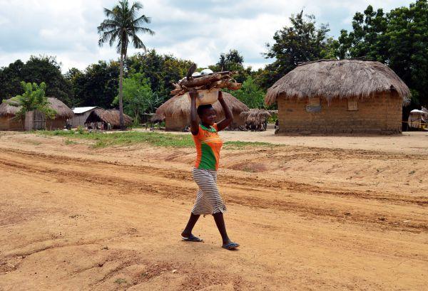 Eine Frau in Togo trägt Feuerholz auf dem Kopf