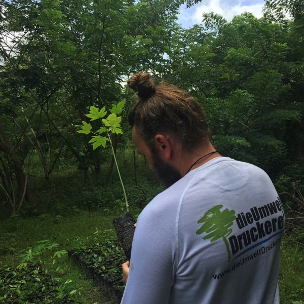 Aufforstung: Bäume pflanzen für den Klimaschutz