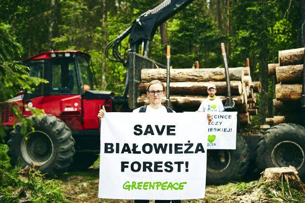 Spenden für den Waldschutz