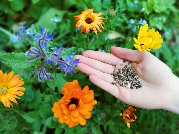 Blütensamen für den Insekteschutz