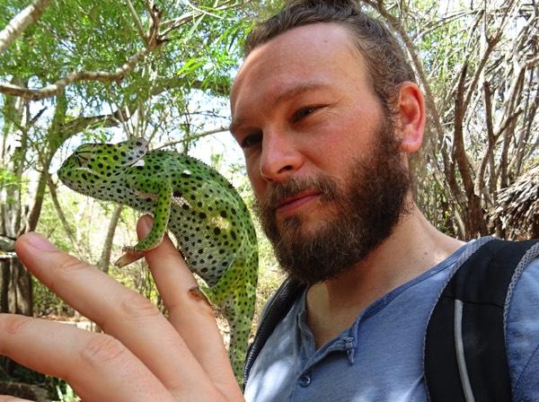"""Neben den omnipräsenten Geckos darf es für die """"Green spotted bush snake"""" auch einmal ein Chamäleon sein."""