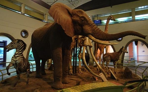 Das Museum liefert mannigfaltige Informationen über die landestypischeFlora und Fauna.