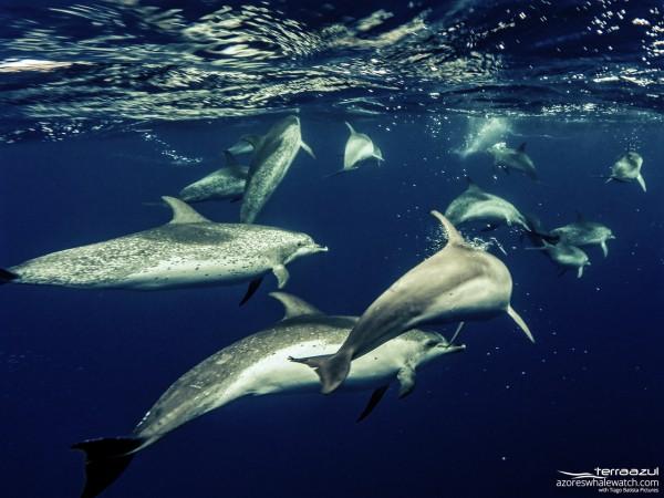 Bedrohte Arten: Delfine und Wale