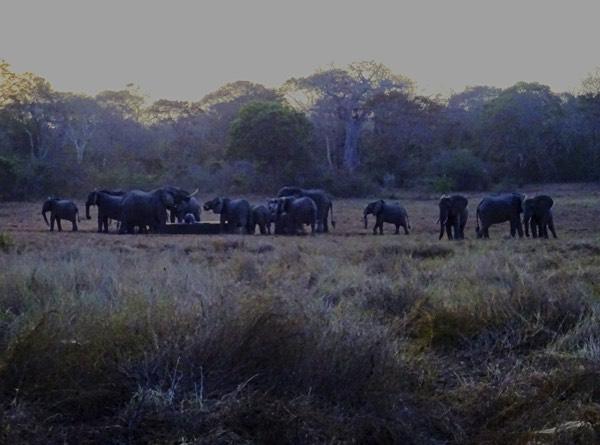 """Aus sicherer Entfernung beobachten wir die Elefantenherde beim Trinken. Der Nationalparkname Arabuko heißt übrigens übersetzt """"Ort des Elefanten""""."""