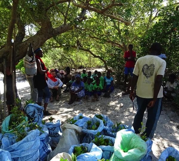 Am kommenden Tag bekommen die vielen freiwilligen Helfer*innen aus der Umgebung eine Einweisung, wie und wo die Mangroven-Setzlinge zu pflanzen sind. Auch eine ortsansässige Schulklasse möchte helfen.