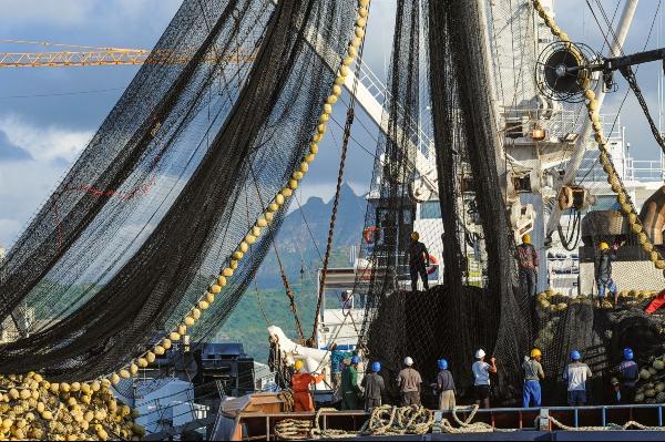 Verzicht auf Fisch: Eine industrielle Fischerei kann nicht nachhaltig sein