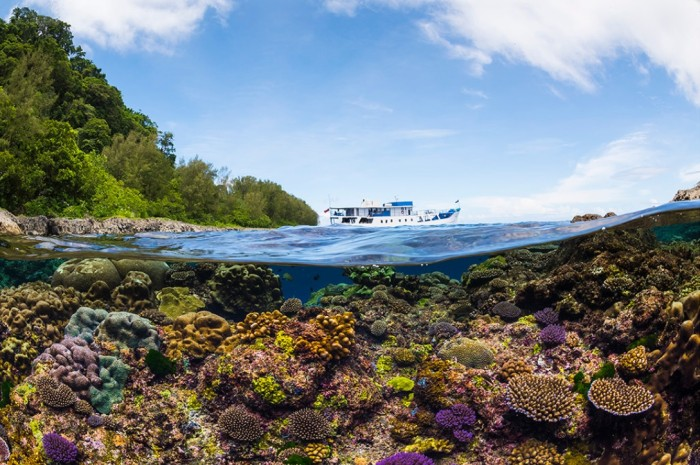 Flora und Fauna des Great Barrier Reefs im australischen Queensland