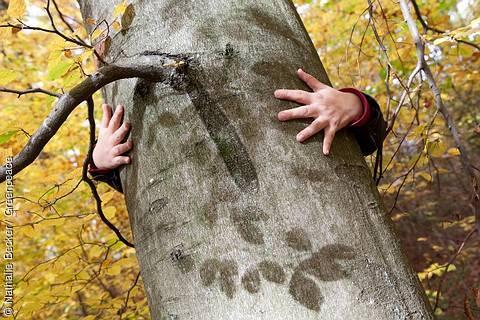 Greenpeace sucht in ganz Deutschland Baumpaten für alte Buchen