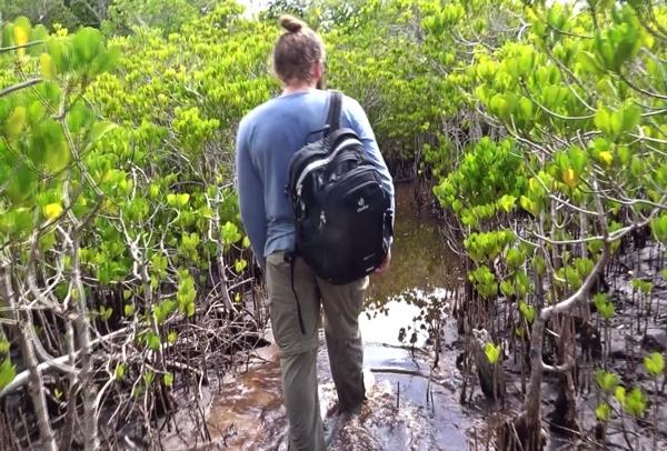 Mit dem gewonnenen Vorwissen geht es nun auf die Suche nach dem sinnvollsten Pflanzort der Setzlinge. Die schwül-warmen Mangrovenwälder werden regelmäßig vom Salzwasser überflutet und so heißt es vorsichtig, durchs braune Brackwasser zu waten.