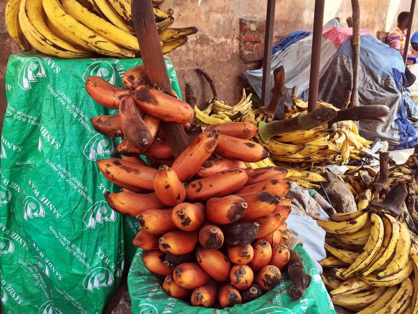 Rote Bananen in Togo