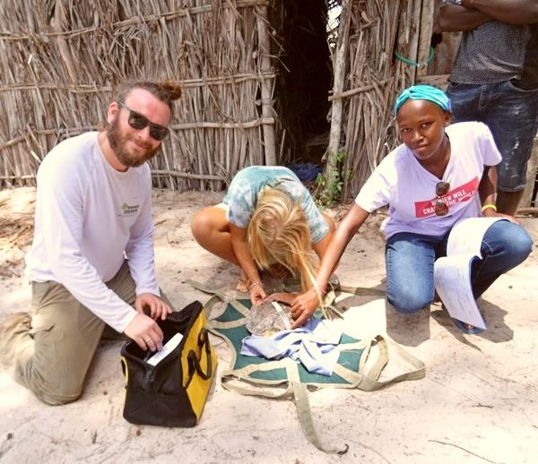 Rettung einer Meeresschildkröte in Kenia
