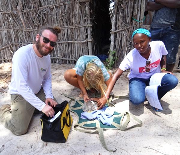 Die Meeresschildkröte wird von unserem Team auf Verletzungen und Krankheiten untersucht sowie gewogen, gemessen und zu Wiedererkennung markiert.