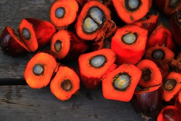 Das Objekt der Begierde: Die Früchte der Ölpalme zur Herstellung von Palm(kern)öl.