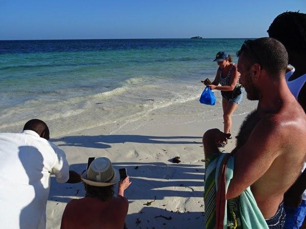 Eine weitere Gefahr: der Mensch. Irgendwie nachvollziehbar und doch ein Problem. Sobald ein Meeresschildkrötenbaby auftaucht, scharren sich dutzende Tourist*innen mit ihren Handy um das Jungtier. Beim Eintauchen in die Gischt wird der unerfahrene Nestling wieder zwischen die Tourist*innen gespült. Es reicht ein falscher Schritt im sandigen Wasser...