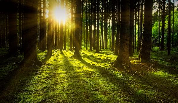 Ein Wald wird von Sonne erfüllt