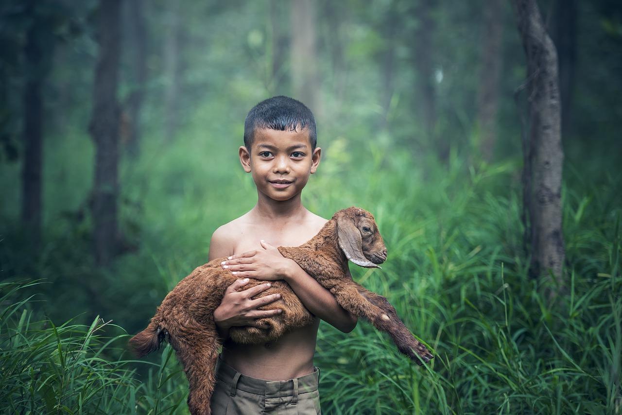 Tiere und Menschen: Ein Lamm wird von einem Jungen getragen