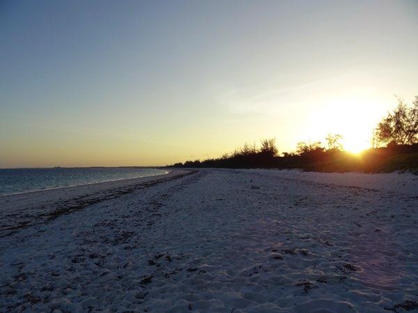 Ein langer Tag neigt sich dem Ende zu. Mit gemischten Gefühlen verlassen wir den Strand. Einige Jungtiere konnten wir retten, viele andere nicht. Morgen haben wir vielleicht mehr Glück.