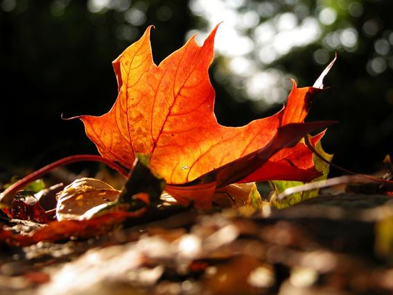 Von wegen grau und dunkel - Farbenfrohes Blatt im Herbst
